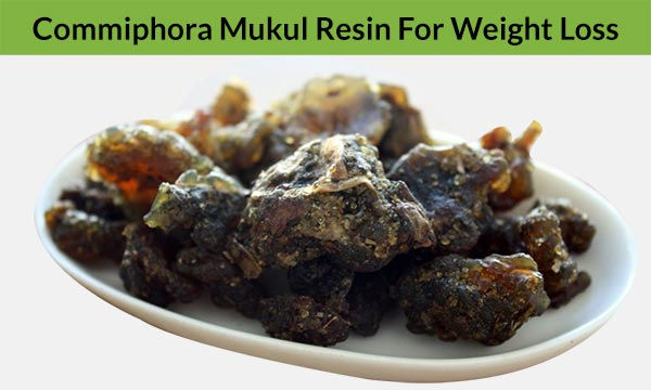 Commiphora Mukul Resin For Weight Loss